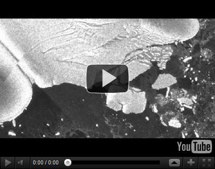tsunami Tsunami no Japão desprendeu gigantes icebergs na Antártida