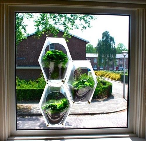 9800957 b9b88fbc4e o Horta na janela