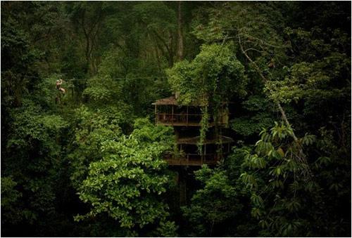 9806177 2901dac068 o O primeiro condomínio de casas na árvore