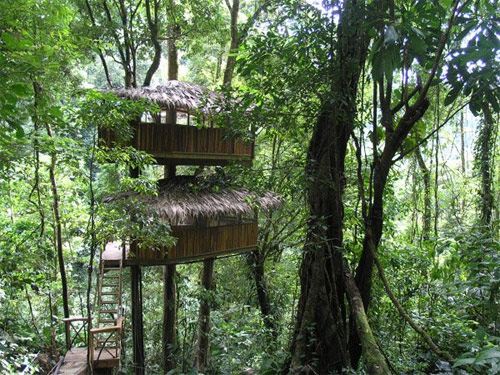 9806182 20ec635752 o O primeiro condomínio de casas na árvore