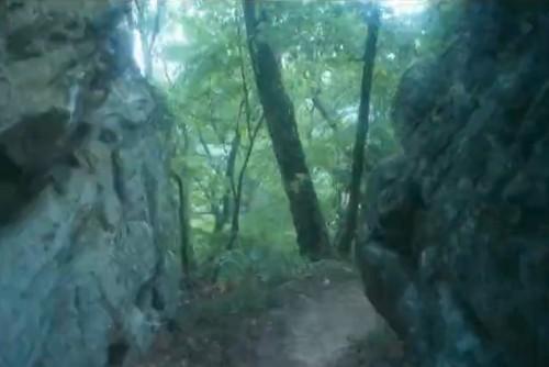 CapturFiles Aug 27 2012 10.52.44 500x334 Túnel verde   Vídeo mostra trilha feita ao longo de 6 meses