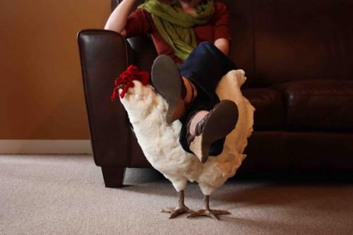 galinha apoio pes 01 500x333 Apoiando os pés em uma galinha