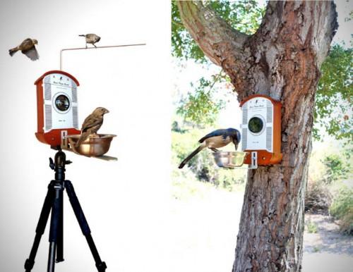 camera fotografica passarinho 03 500x386 Como tirar fotos de passarinhos bem de perto