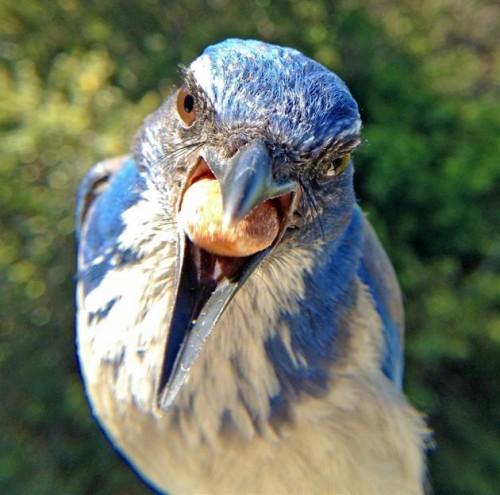 camera fotografica passarinho 04 500x495 Como tirar fotos de passarinhos bem de perto