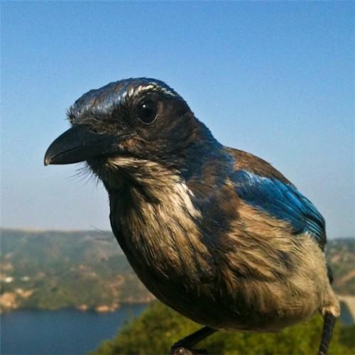 camera fotografica passarinho 05 500x500 Como tirar fotos de passarinhos bem de perto
