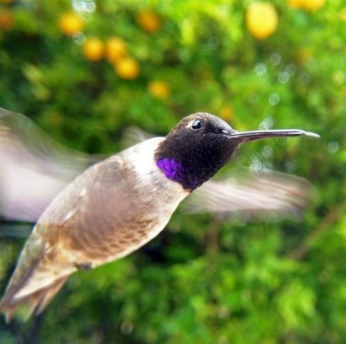 camera fotografica passarinho 06 500x498 Como tirar fotos de passarinhos bem de perto