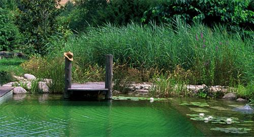 piscina.04 Piscina biológica
