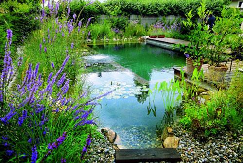 piscina.37 Piscina biológica
